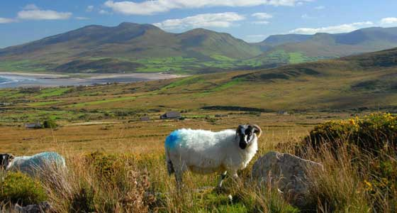 Self-Guided Walking Holidays around Ireland's Dingle Peninsula