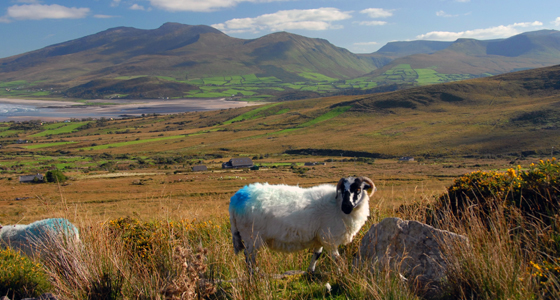 Self-Guided Walking Holidays around Ireland's Dingle Peninsula Walk - 7 Days