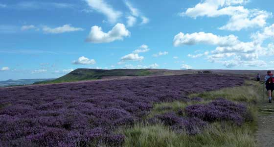 Self-Guided Walking Holidays along the United Kingdom's North Yorkshire Trails