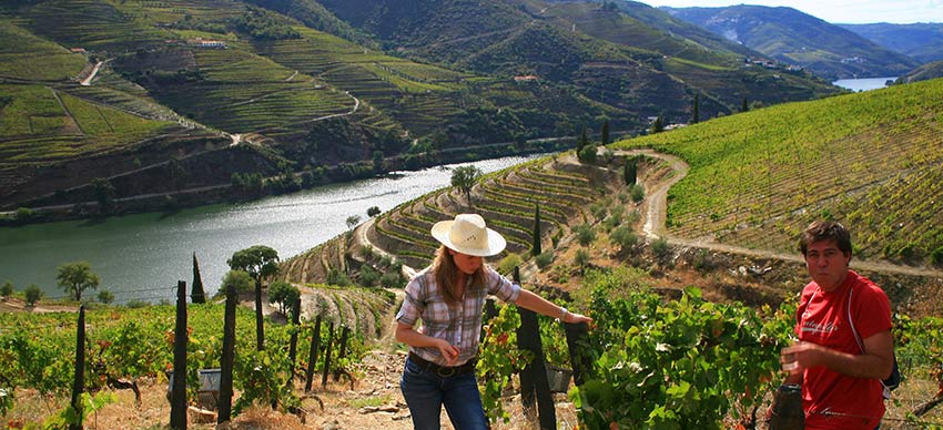 Visit Portugal in September to enjoy the grape harvest - Sherpa Expeditions