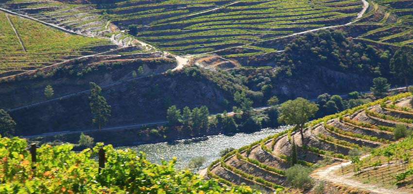 Vineyards in the Douro Valley - Sherpa Walking Holidays