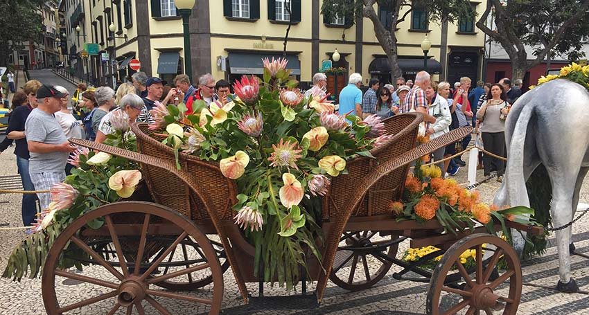 visit Madeira's flower festival - Sherpa Expeditions