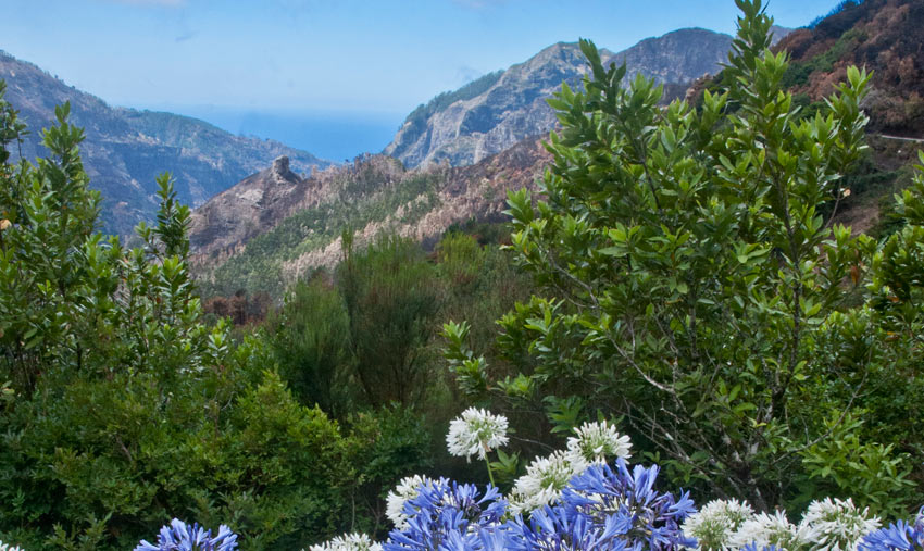 explore the flora of Madeira on a walking holiday with Sherpa Expeditions