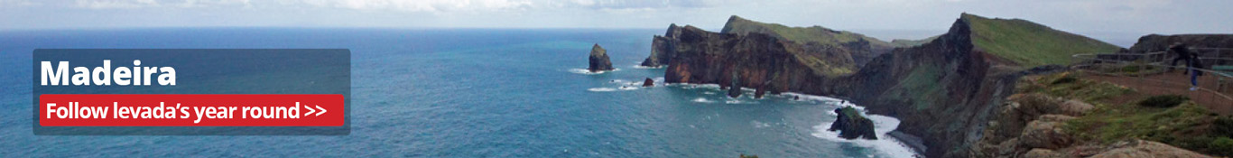 Information, reviews and advice on Madeira walking holidays